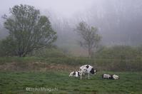 朝もやの中 - ekkoの --- four seasons --- 北海道
