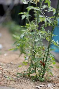 家庭菜園 - ken.style-photograph