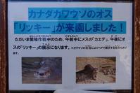 2019/03/22 盛岡市動物公園 カエデとリッキー - 墨色の鳥籠