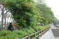 散歩道の柿と栗/夏至の頃 - そらいろのパレット
