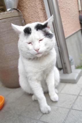 ヨウカンさんが来た日 - ぶつぶつ独り言2(うちの猫ら2018)