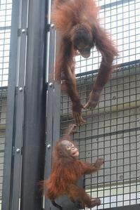 ロキ君が成長しててびっくり - 動物園に嵌り中