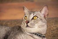 ご近所猫 2019.06.23 - Rayblade Photos