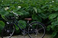 自転車で - ブナの写真日記