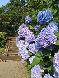 卯辰山の階段 - ちょんまげブログ