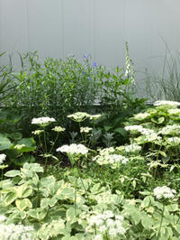 6月に咲く小花やブルー&ホワイトの花 - Bleu Belle Fleur☆ブルーベルフルール