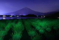 令和元年6月の富士(15)河口湖夜のラベンダーと富士 - 富士への散歩道 ~撮影記~
