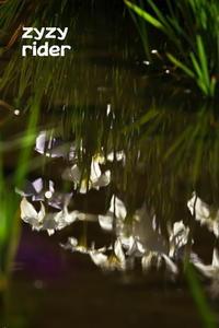 ことしはじめてのハナショウブかな - ジージーライダーの自然彩彩