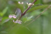 花のとき - ecocoro日和