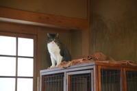 強面ビビリ王子の家猫修業記その32余裕のよっちゃん - りきの毎日