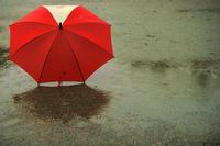雨とかさ - みすずのブログ