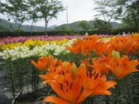 篠山玉水ゆり園あじさい園へ - 花の自由旋律