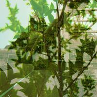 PLANT ×  PLANT <植物は誰の工場なの?> - poem  art. ***ココロの景色***