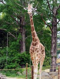 小さなお嫁さん - 動物園放浪記