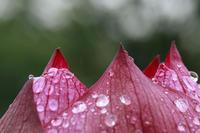 今日の堀之内公園雨だ - みるはな写真くらぶ