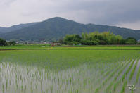 桜井市新堂 - ぶらり記録 2:奈良・大阪・・・