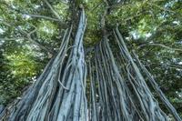 第901回  Picturesque landscapes in Hawaii - 湘南群青 -The sunset  blue -