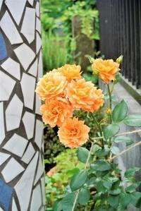 咲くわ、咲くわ、次から次へ~ - 気楽おっさんの蓼科偶感