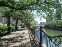 ちょっと寄り道・梅雨の晴れ間の大岡川 - 神奈川徒歩々旅