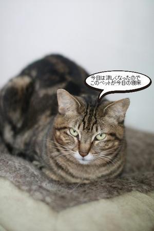 梅雨寒な一日 - 保護猫さんのご縁探し