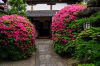 光明院のツツジ - 花景色-K.W.C. PhotoBlog