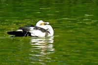 池のバリケンが水浴びを - ぶらり散歩 ~四季折々フォト日記~