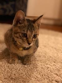 新しい家族。。。レイちゃん - ひだりききの猫