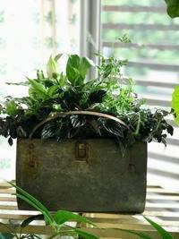 6月ガーデン&クラフツ  寄せ植え教室  ① - 小さな庭 2