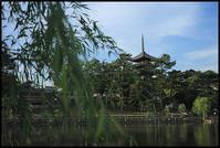 奈良観光-16 - Camellia-shige Gallery 2