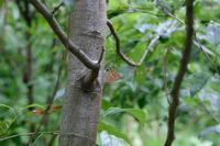 ■ミドリシジミが産卵?19.6.24 - 舞岡公園の自然2