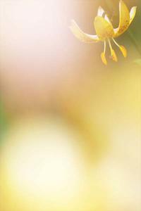 今日のふわラー #415 - ainosatoブログ02
