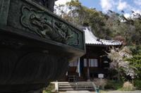 山崎聖天桜 - 京都デジカメ散歩