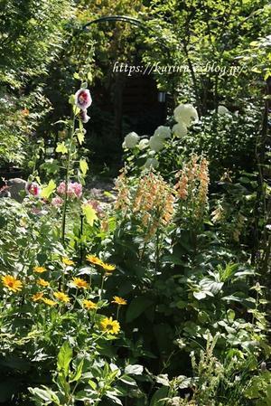輝く初夏の庭~* - miyorinの秘密のお庭
