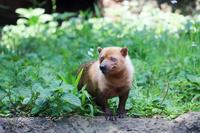 よこはま動物園ズーラシア2019年6月19日 - お散歩ふぉと2