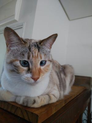 楕円のカゴ入荷 - 猫がいる長野の雑貨屋 OLD RIVER オールドリバー