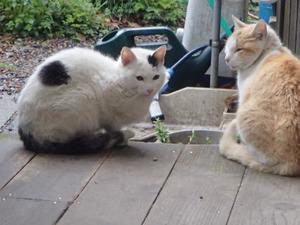 野良猫保護顛末記その(5) - burnet hillのパートナーたち