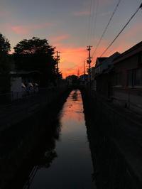 夕焼け - マリカの野草画帖