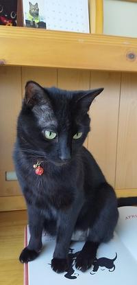 ほんの少し - 黒猫瓦版