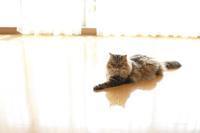 猫たちもたぶん気に入った新しい夏用ラグ - きょうだい猫と仲良し暮らし