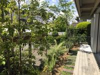 「たまプラーザの家」の緑 - HAN環境・建築設計事務所