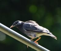 野鳥 - 信仙のブログ
