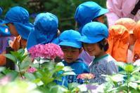 園児と紫陽花 - 信仙のブログ