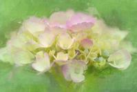 アジサイ - 光 塗人 の デジタル フォト グラフィック アート (DIGITAL PHOTOGRAPHIC ARTWORKS)