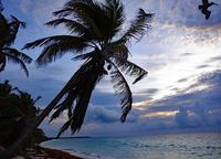 メキシコ・ユカタン半島のサイトフラットフライフィッシング遠征。 - Fly Fishing Total Support.TEAL