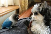 B.B & Chipo*コドモ(?)自慢(笑)?? - FUNKY'S BLUE SKY