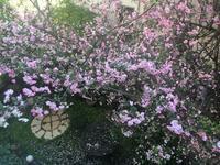 海堂が夢のひと時をみせてくれます - Mayumin's rose garden&table 小さな秘密の花園で