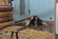 ナツ親子 - 動物園へ行こう