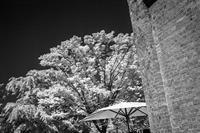 白く輝く樹木に対抗意識を燃やす赤煉瓦 - Silver Oblivion