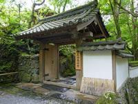 6月の京都その6青紅葉の高雄周辺散策 - 風任せ自由人