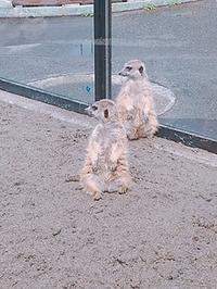 動物のなぞ - まるぜん住宅設備ブログ「いつも前むき」